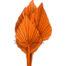Plam Spear Orange Color