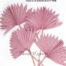 PALM SUN SPEER FROSTED PINK - Trockenblumen